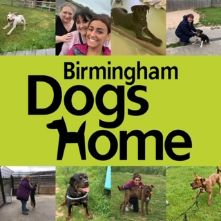 A DAYS VOLUNTEERING AT BIRMINGHAM DOGS HOME